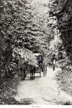 A. Duperly and Sons - Fern Gully (c1890)